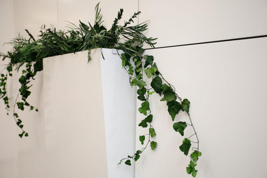 rastliny_naturalsolutions_jtre08